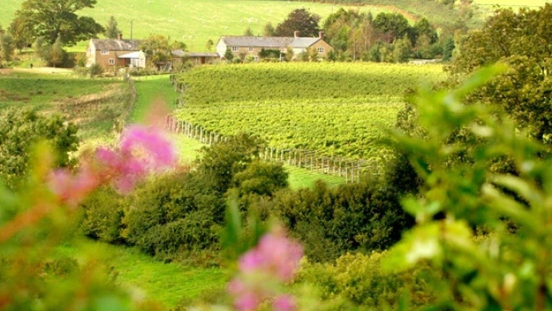 views-over-furleigh-estate-winery-dorset