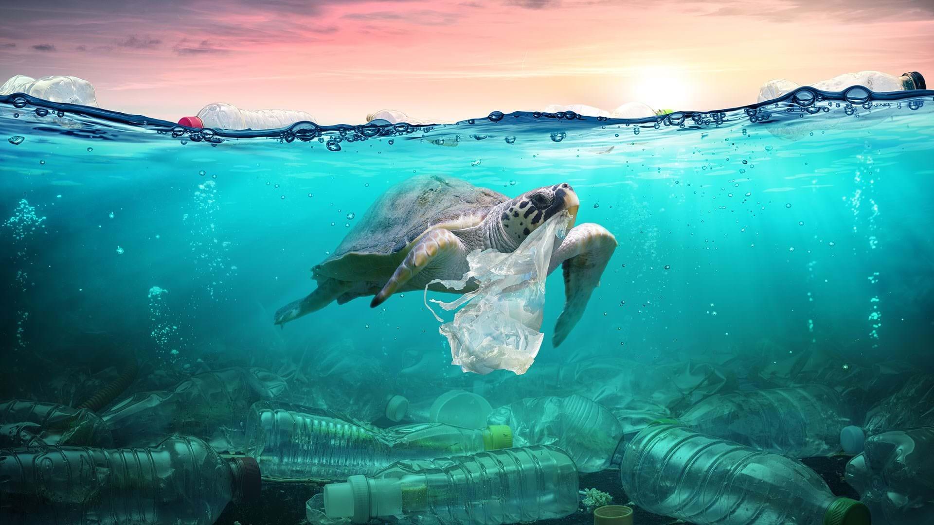 100 Plastic In The Ocean Statistics Facts 2020