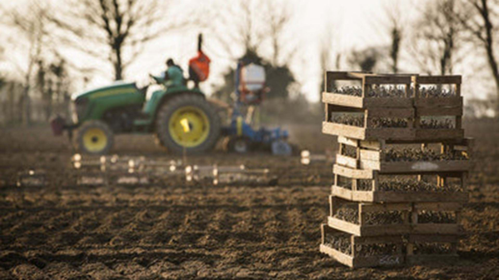 tractors-ploughing-jersey-royal-potatoes-channel-islands