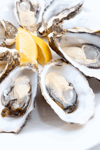 oysters fresh in st malo brittany france