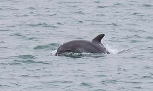 Dolphin spotting with Condor Ferries
