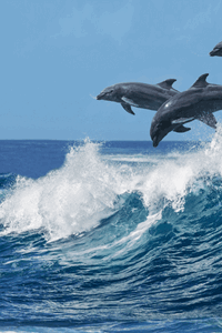 dolphins jumping in water marinelife