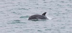 Dolphins and Condor Ferries